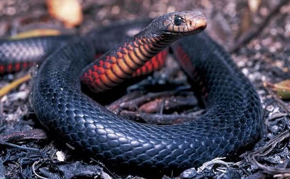 Животные-Австралии-Описание-названия-и-особенности-животных-Австралии-32