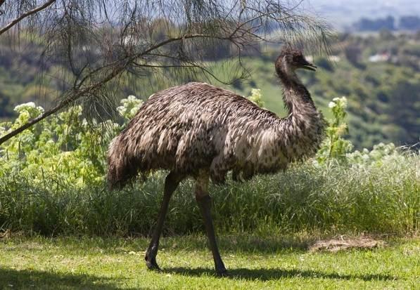 Животные-Австралии-Описание-названия-и-особенности-животных-Австралии-34