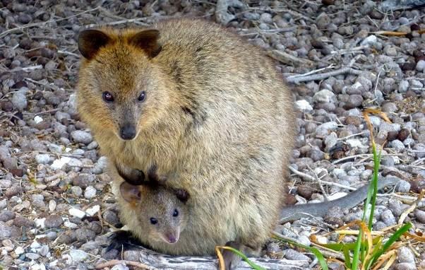 Животные-Австралии-Описание-названия-и-особенности-животных-Австралии-4