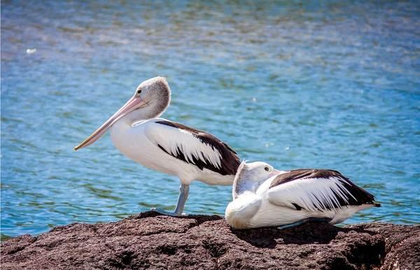 Животные-Австралии-Описание-названия-и-особенности-животных-Австралии-45