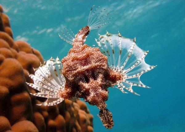 Животные-Австралии-Описание-названия-и-особенности-животных-Австралии-58