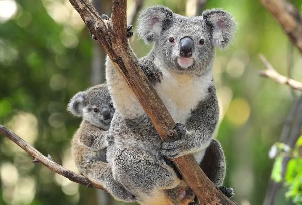 Животные-Австралии-Описание-названия-и-особенности-животных-Австралии-6
