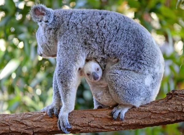 Животные-Австралии-Описание-названия-и-особенности-животных-Австралии-7