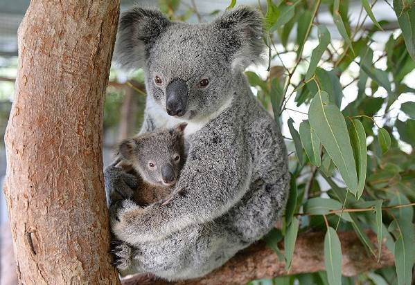 Животные-Австралии-Описание-названия-и-особенности-животных-Австралии-8