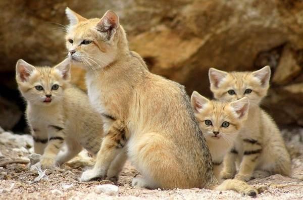 Животные-пустыни-Описания-названия-и-особенности-животных-пустыни-14
