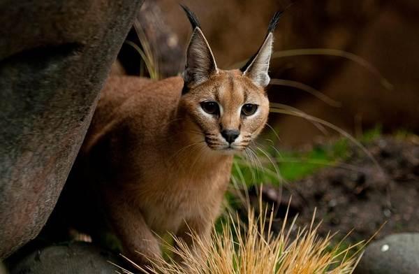 Животные-пустыни-Описания-названия-и-особенности-животных-пустыни-2
