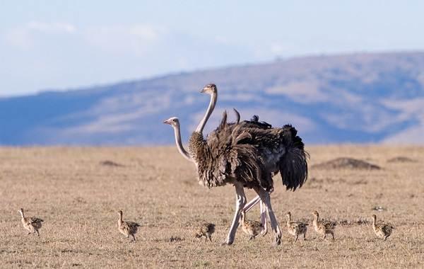 Животные-пустыни-Описания-названия-и-особенности-животных-пустыни-31