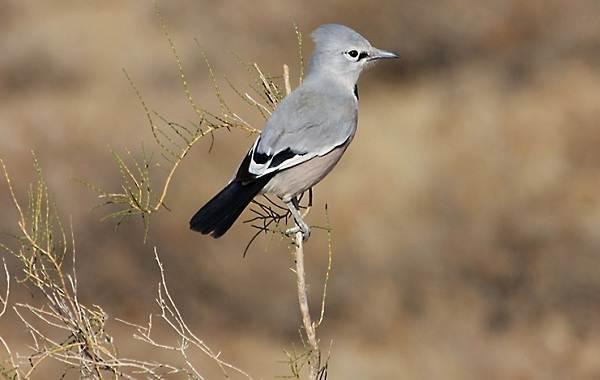 Животные-пустыни-Описания-названия-и-особенности-животных-пустыни-35
