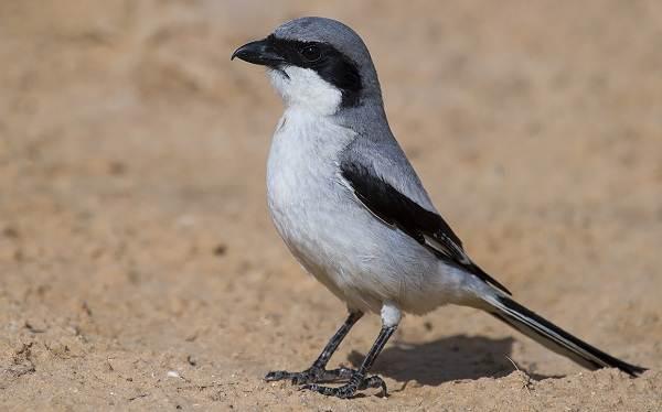 Животные-пустыни-Описания-названия-и-особенности-животных-пустыни-36