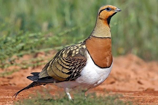 Животные-пустыни-Описания-названия-и-особенности-животных-пустыни-38