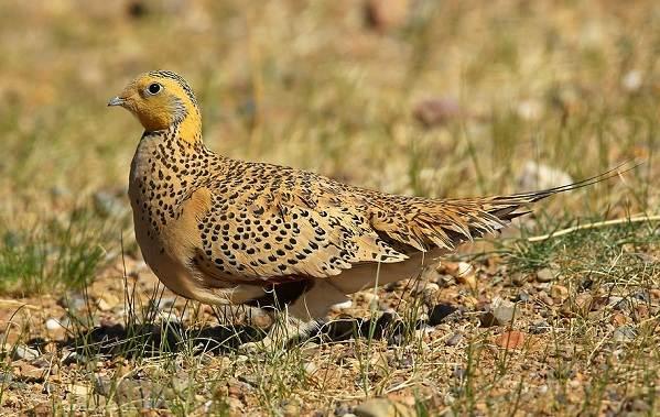 Животные-пустыни-Описания-названия-и-особенности-животных-пустыни-39