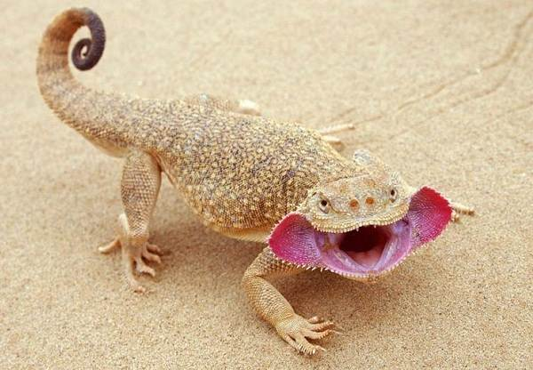 Животные-пустыни-Описания-названия-и-особенности-животных-пустыни-44