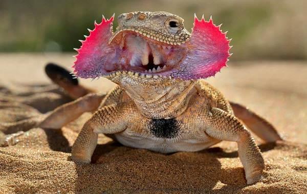 Животные-пустыни-Описания-названия-и-особенности-животных-пустыни-45