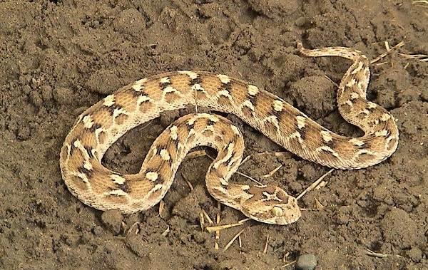 Животные-пустыни-Описания-названия-и-особенности-животных-пустыни-46