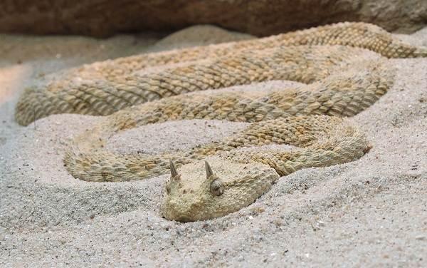 Животные-пустыни-Описания-названия-и-особенности-животных-пустыни-47