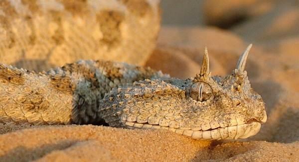 Животные-пустыни-Описания-названия-и-особенности-животных-пустыни-48