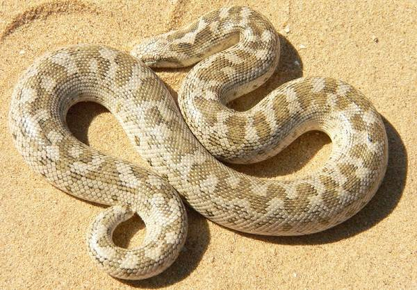 Животные-пустыни-Описания-названия-и-особенности-животных-пустыни-49
