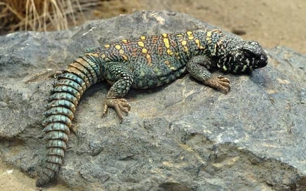 Животные-пустыни-Описания-названия-и-особенности-животных-пустыни-51