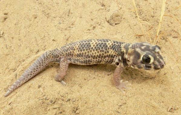 Животные-пустыни-Описания-названия-и-особенности-животных-пустыни-53