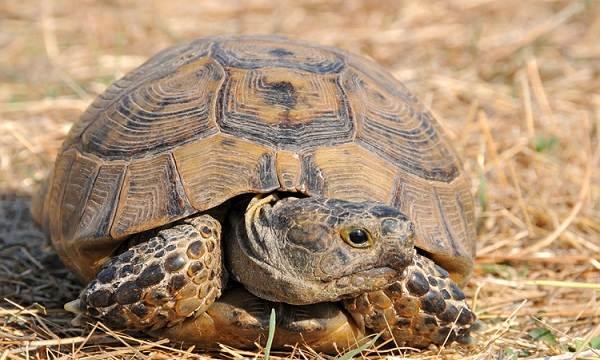 Животные-пустыни-Описания-названия-и-особенности-животных-пустыни-56