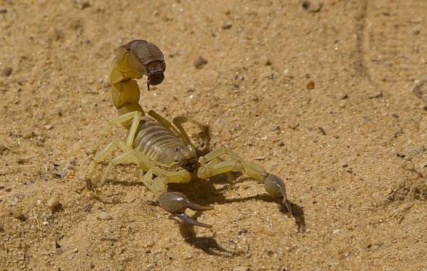 Животные-пустыни-Описания-названия-и-особенности-животных-пустыни-58