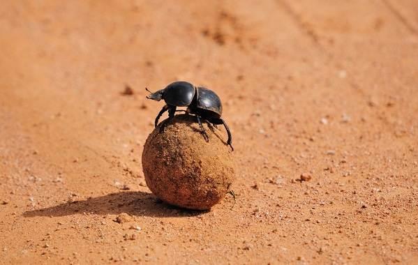 Животные-пустыни-Описания-названия-и-особенности-животных-пустыни-61