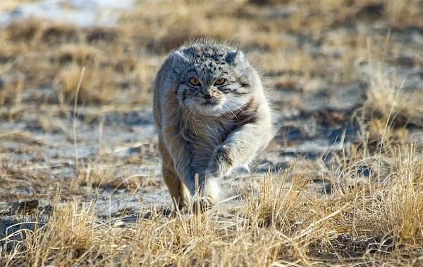 Животные-пустыни-Описания-названия-и-особенности-животных-пустыни-9