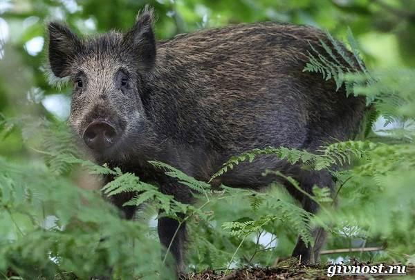 Животные-тайги-Описание-названия-и-особенности-животных-тайги-11