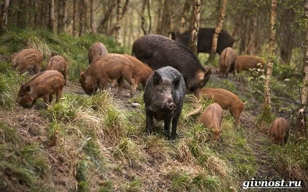 Животные-тайги-Описание-названия-и-особенности-животных-тайги-12