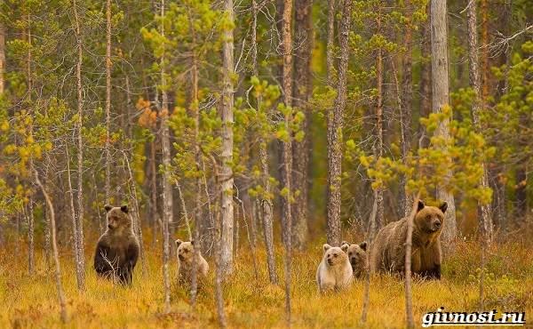 Животные-тайги-Описание-названия-и-особенности-животных-тайги-17