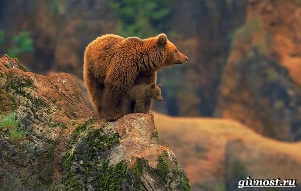 Животные-тайги-Описание-названия-и-особенности-животных-тайги-18