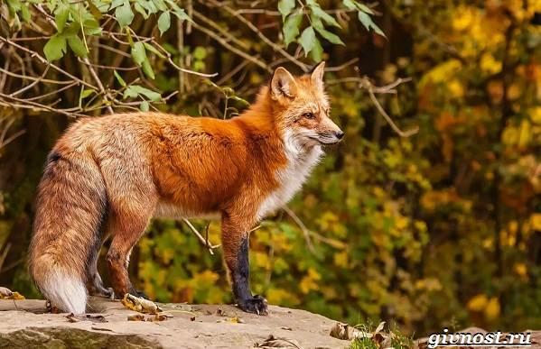 Животные-тайги-Описание-названия-и-особенности-животных-тайги-23