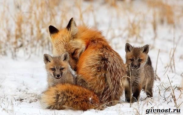 Животные-тайги-Описание-названия-и-особенности-животных-тайги-24