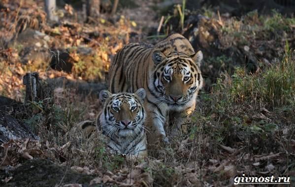 Животные-тайги-Описание-названия-и-особенности-животных-тайги-28