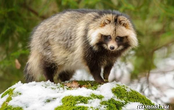 Животные-тайги-Описание-названия-и-особенности-животных-тайги-31