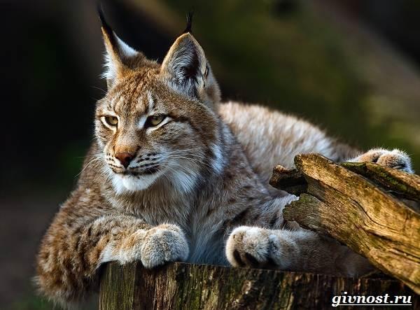 Животные-тайги-Описание-названия-и-особенности-животных-тайги-33