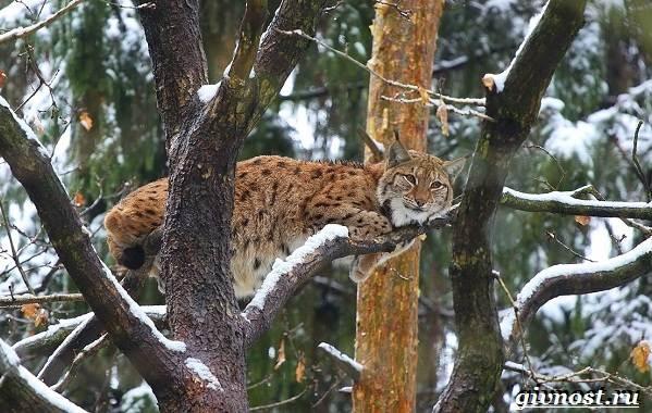 Животные-тайги-Описание-названия-и-особенности-животных-тайги-35