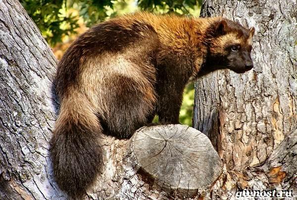 Животные-тайги-Описание-названия-и-особенности-животных-тайги-8