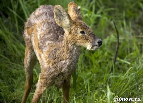 Животные-тайги-Описание-названия-и-особенности-животных-тайги-9