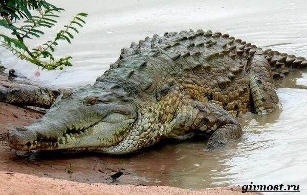 Животные-Южной-Америки-Описание-названия-и-виды-животных-Южной-Америки-17