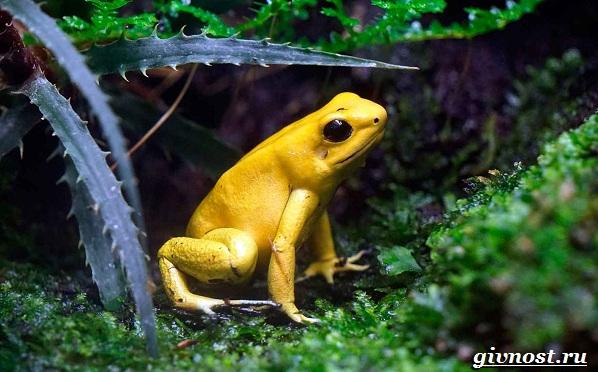 Животные-Южной-Америки-Описание-названия-и-виды-животных-Южной-Америки-2