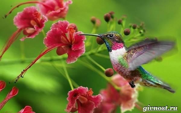 Животные-Южной-Америки-Описание-названия-и-виды-животных-Южной-Америки-24