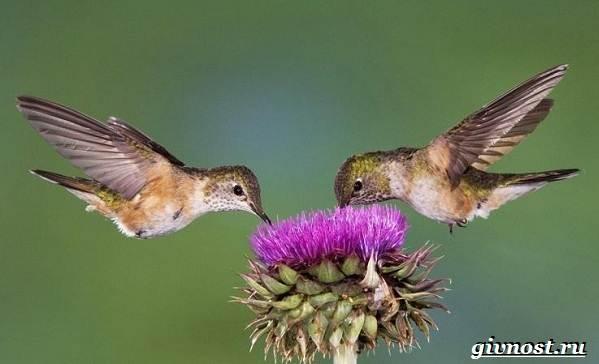 Животные-Южной-Америки-Описание-названия-и-виды-животных-Южной-Америки-25