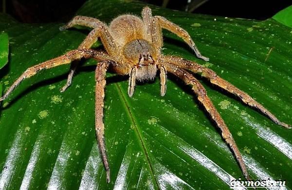 Животные-Южной-Америки-Описание-названия-и-виды-животных-Южной-Америки-3