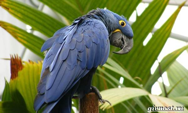 Животные-Южной-Америки-Описание-названия-и-виды-животных-Южной-Америки-360