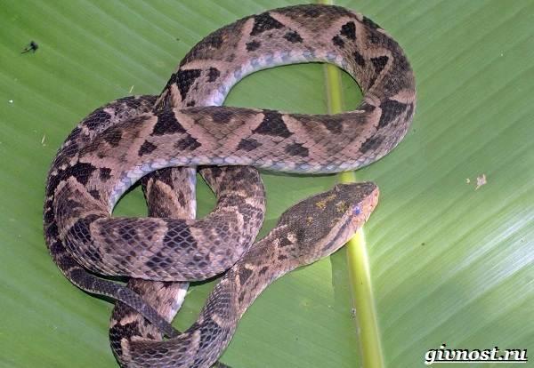 Животные-Южной-Америки-Описание-названия-и-виды-животных-Южной-Америки-4