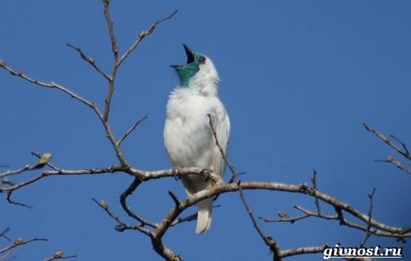 Животные-Южной-Америки-Описание-названия-и-виды-животных-Южной-Америки-46