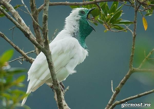 Животные-Южной-Америки-Описание-названия-и-виды-животных-Южной-Америки-47