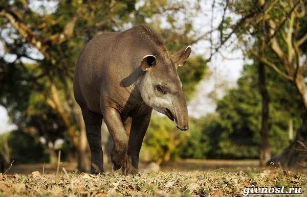 Животные-Южной-Америки-Описание-названия-и-виды-животных-Южной-Америки-51