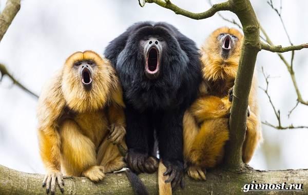 Животные-Южной-Америки-Описание-названия-и-виды-животных-Южной-Америки-53